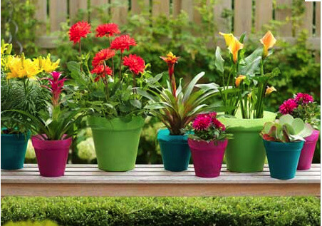 Expert Gardening Tips for Your Home Garden