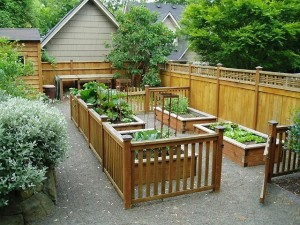 vegetable patio garden photo