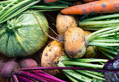 Growing the Most Cost-Effective Vegetables