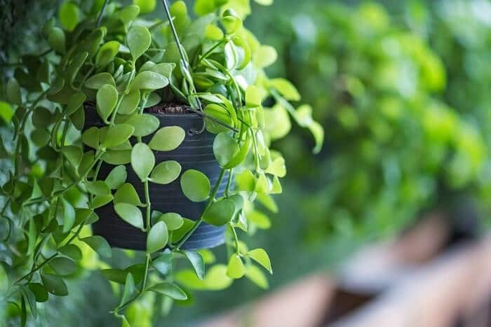 The Top 7 Hanging Plants That Thrive in Gardens