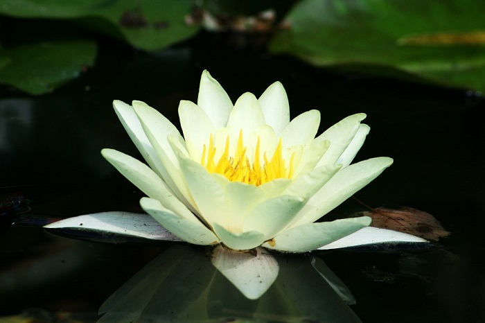 Top 4 Pond Plants for Growing in Water Areas of Your Garden