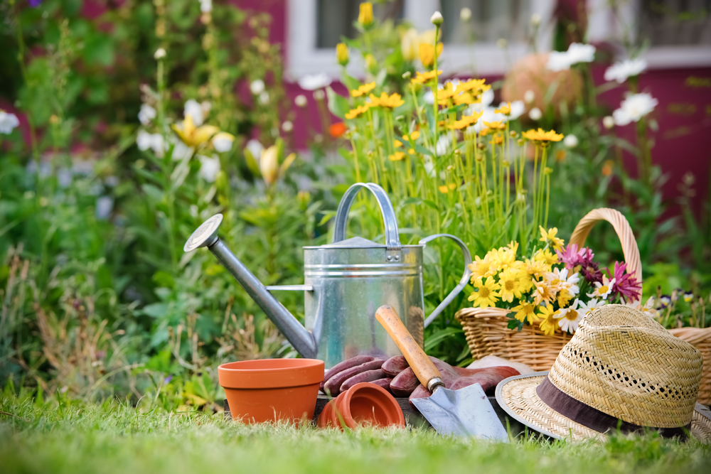 Top 10 Best Gardening Blogs To Check Out For That DIY Garden