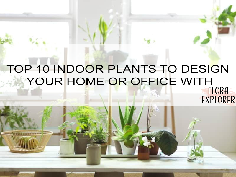 Top 10 Indoor Plants To Design Your Home Or Office With