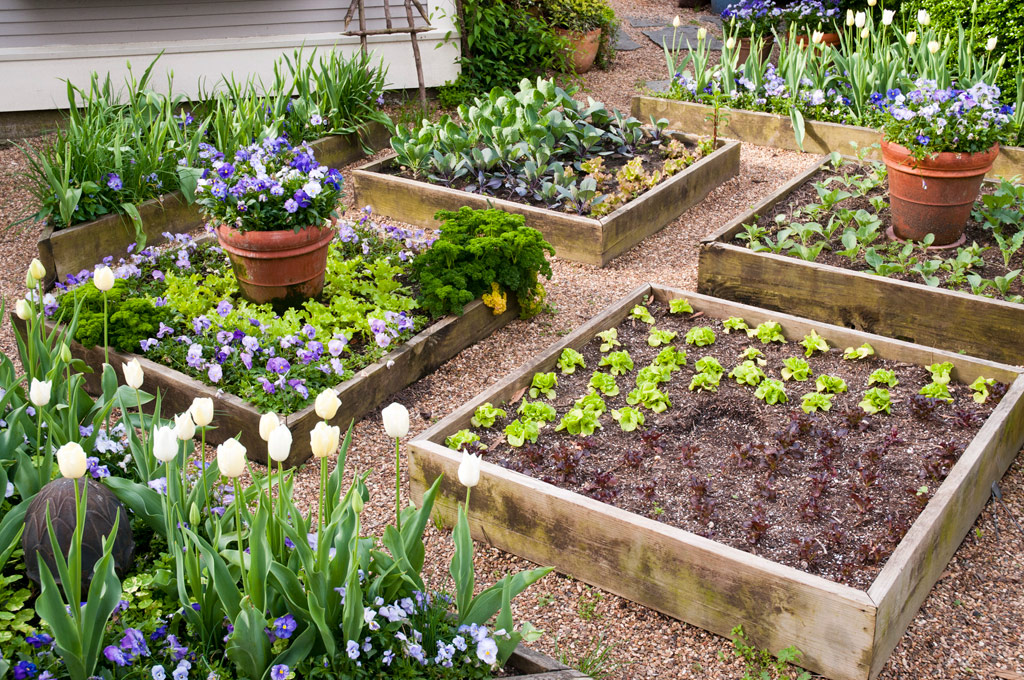Image of: The Perfect Vegetable Garden Layout 5 Basic Considerations Floraexplorer
